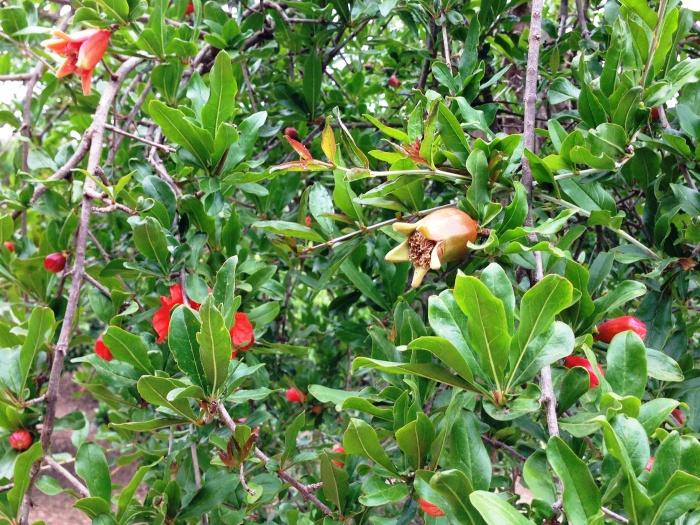 Sicilija_Tree2