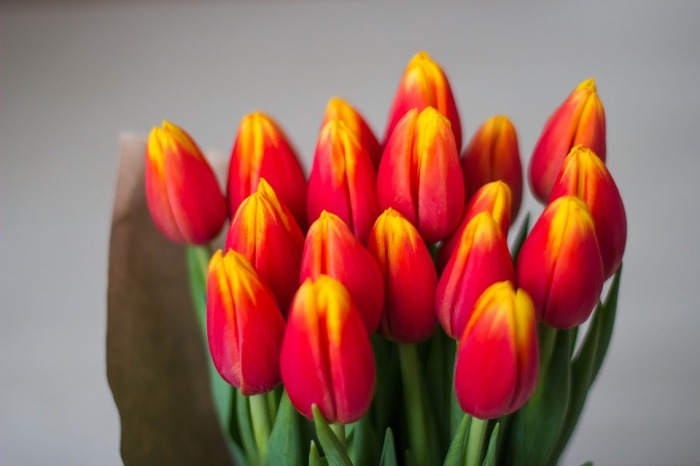 tulips-1228322_960_720
